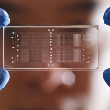 A person holding a microfluidic device